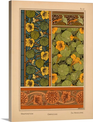 The Plant and its Ornamental Applications, Plate 41 - Nasturtium