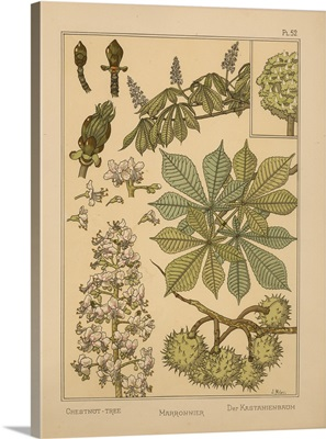 The Plant and its Ornamental Applications, Plate 52 - Chestnut-tree