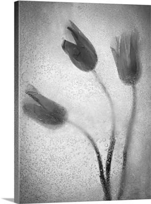 Tulipanes Amarillos 37 1