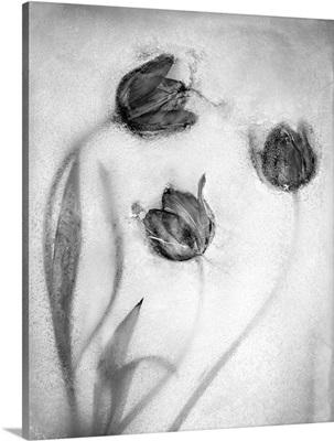 Tulipanes Rojos-2