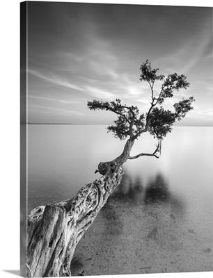 Water Tree I
