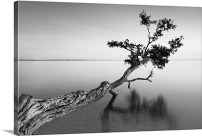 Water Tree II
