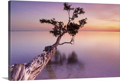 Water Tree IV