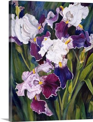 Wind Blown Iris