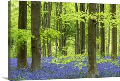Woodland Realms