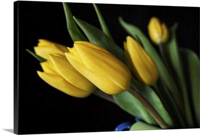 Yellow Springtime