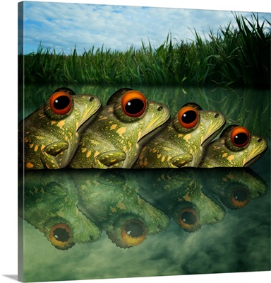 Army Of Frogs