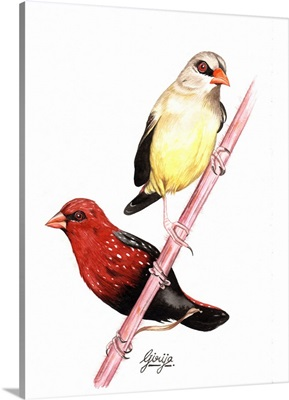 Finch Birds