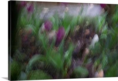 Garden Rain 2