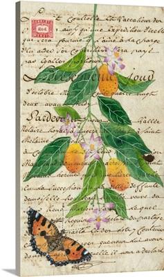 Kumquats On Antique Paper 4