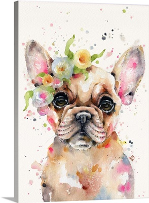 Little Miss Frenchie