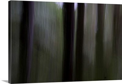 Mysterious Woods 3