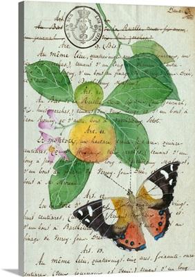 Oranges On Antique Paper 3