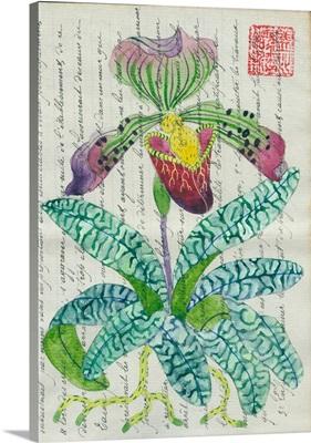 Slipper Orchid 1