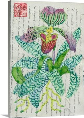 Slipper Orchid 2