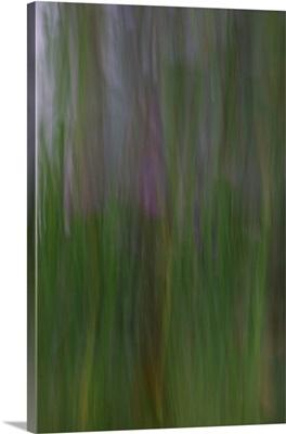 Willow Dream 1