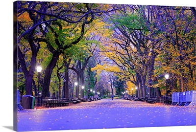 Central Park The Mall