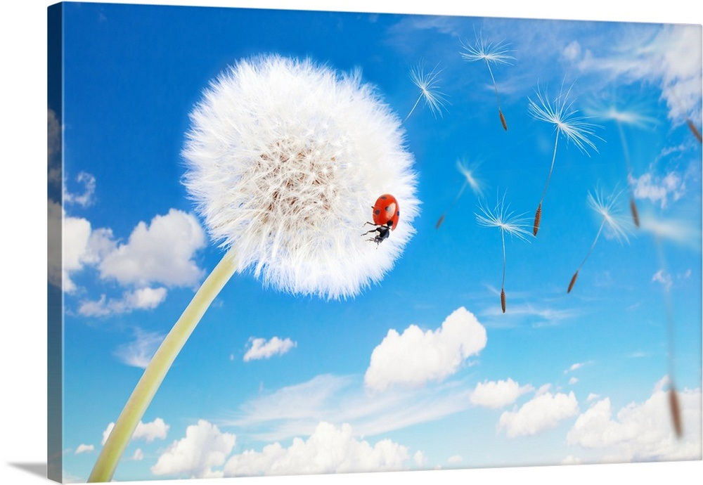 Ladybug On A Dandelion With Seeds Blowing Away In The Wind