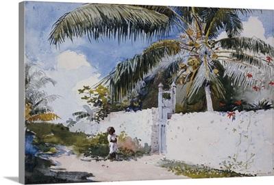 A Garden in Nassau, 1885
