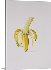 A Half-peeled Banana, 1997 (w/c on paper)
