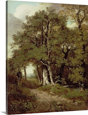 A Wooded Path