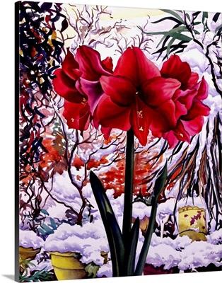 Amaryllis by Snow Window