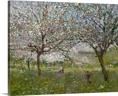 Apple Trees in Flower