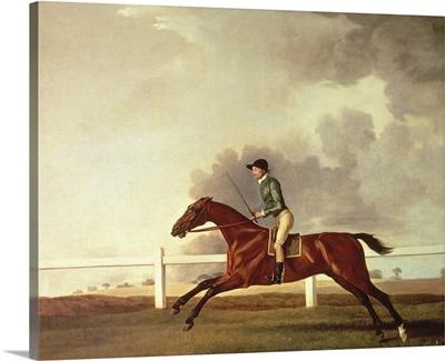 Bay Malton with John Singleton Up, c.1767