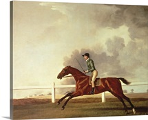 Bay Malton with John Singleton Up, c.1767 (oil on canvas)