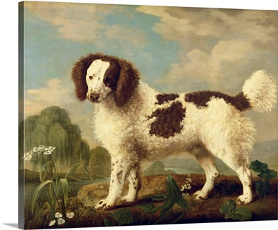 Brown and White Norfolk or Water Spaniel, 1778
