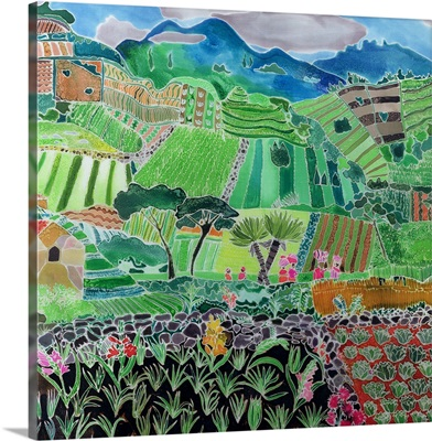 Cabbages and Lilies, Solola Region, Guatemala, 1993