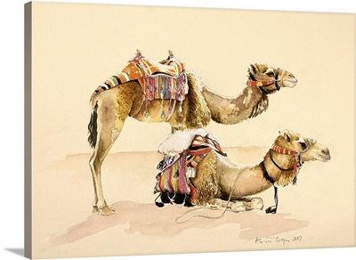 Camels from Petra, 2007