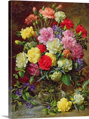 Carnations of Radiant Colours