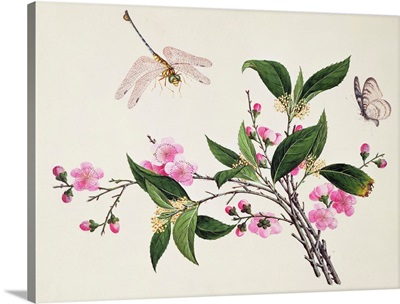 Cherry Blossom  Dragonfly and Butterfly