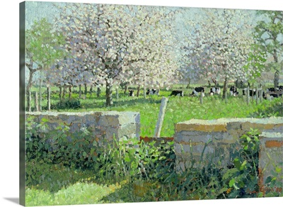 Cows in the Orchard, 1988