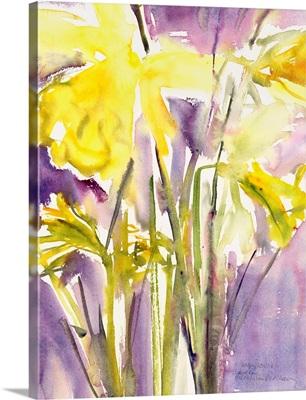 Daffodils, 2004