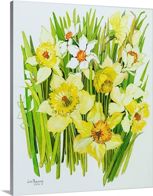 Daffodils and narcissus