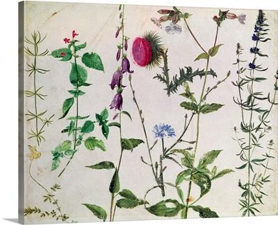 Eight Studies of Wild Flowers