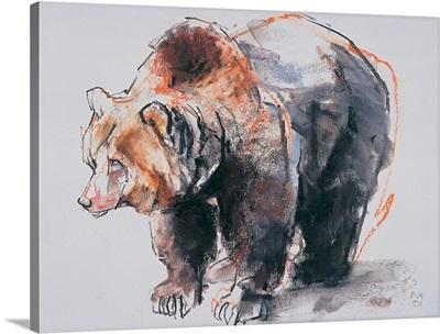 European Brown Bear, 2001