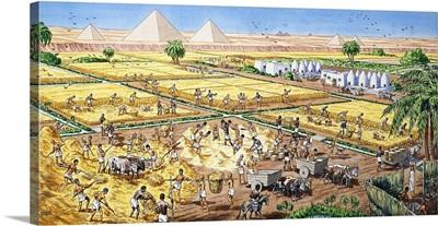 Farming in Egypt