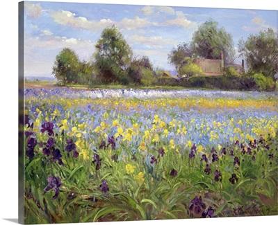 Farmstead and Iris Field, 1992