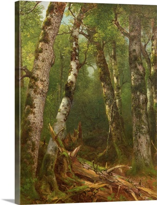 Group of Trees, 1855-77