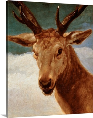 Head of a Stag, 1634