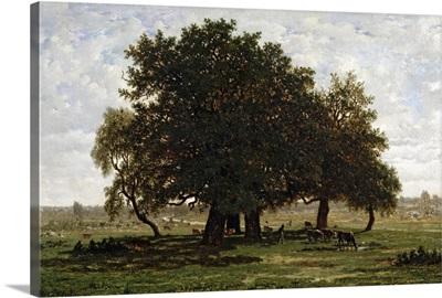 Holm Oaks, Apremont, 1850 52