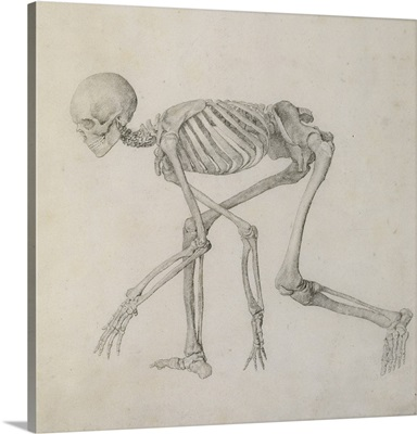 Human Skeleton: Lateral view in Crouching Posture