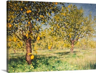 Impossibility Of A Lemon Tree, 2013