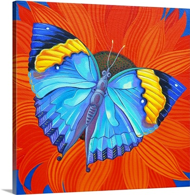 Indian Leaf Butterfly, 2014