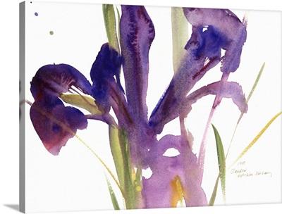 Iris, 1987