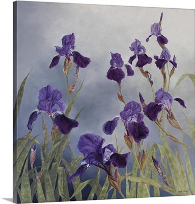 Iris Hybrida, 2015