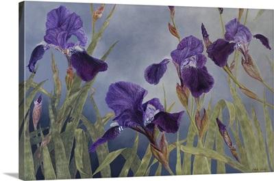 Iris Hybrida (Detail), 2015
